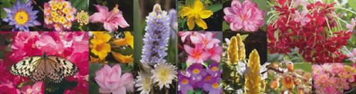 ws-flower[1].jpg