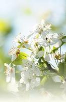 お花~白.JPG